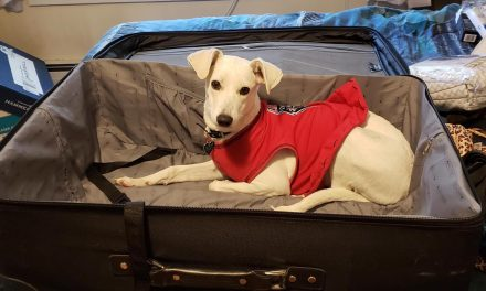 Everything You Need to Know About Rescuing a Dog Overseas